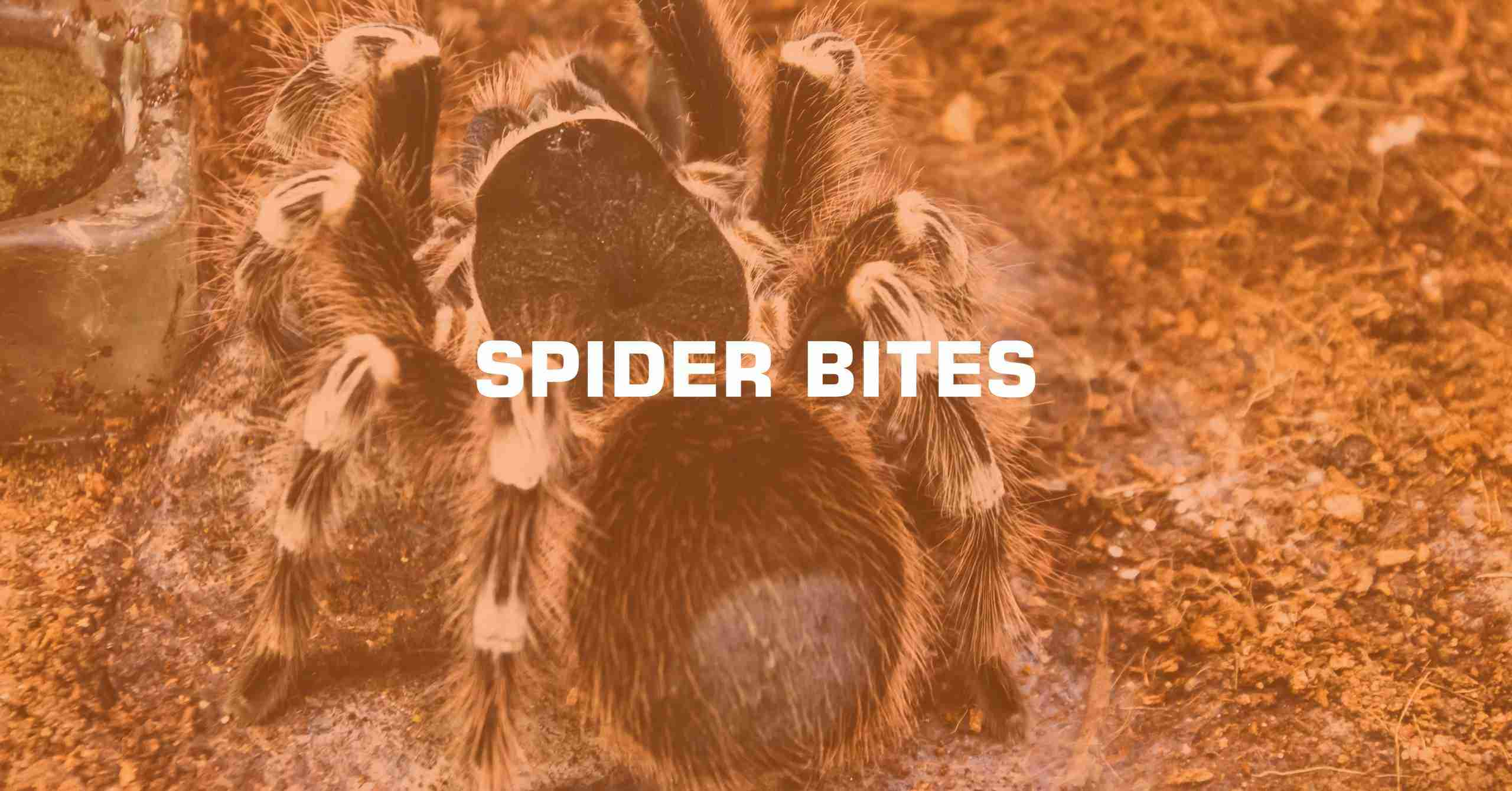 SPIDER BITES min scaled